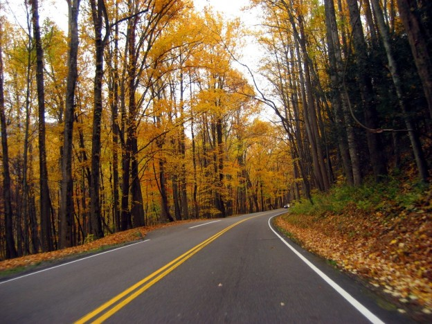 driving in autumn - picture of an empty road